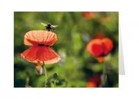 Grußkarte »Biene auf der Mohnblume«