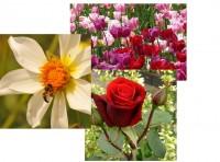 Grußkartenserie »Blütenträume«, Set