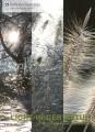Grußkarten »Licht in der Natur«, Set