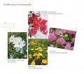 Grußkartenserie »Blumengrüße«, Set