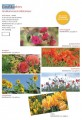 Grußkartenserie »Blütenmeer«, Set